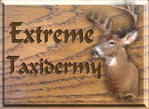 Extreme Taxidermy